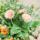 季節のおまかせ 寄せ植えSサイズ